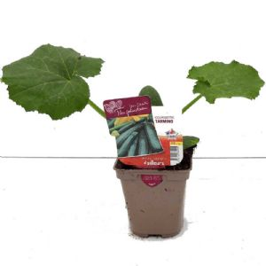 COURGETTE TARMINO POT DE 0.5L